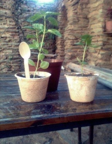 recycled cups with plants in them and spoons with the price on