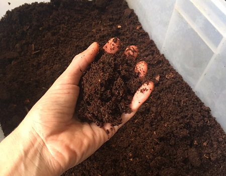 A hand holding compost above a crate full of compost