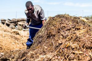 A man turning a large compost pile with a spade